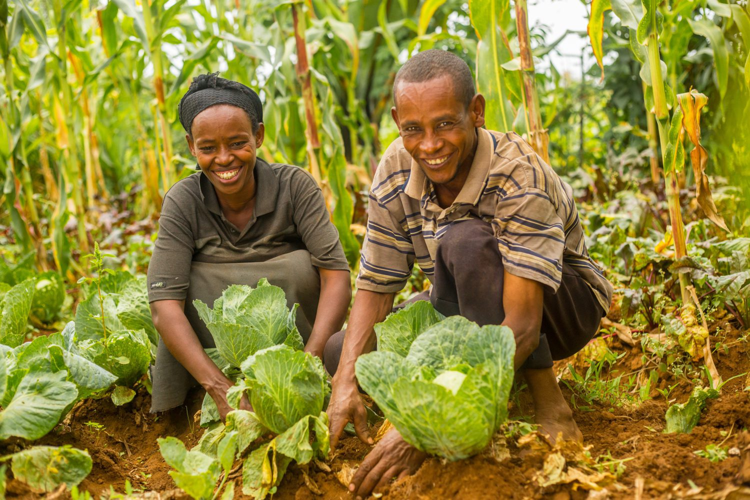Abebe in his garden with cabbages e1533024122418