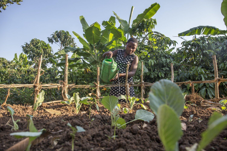 Agnes tending to the basket garden 1 e1533023941816