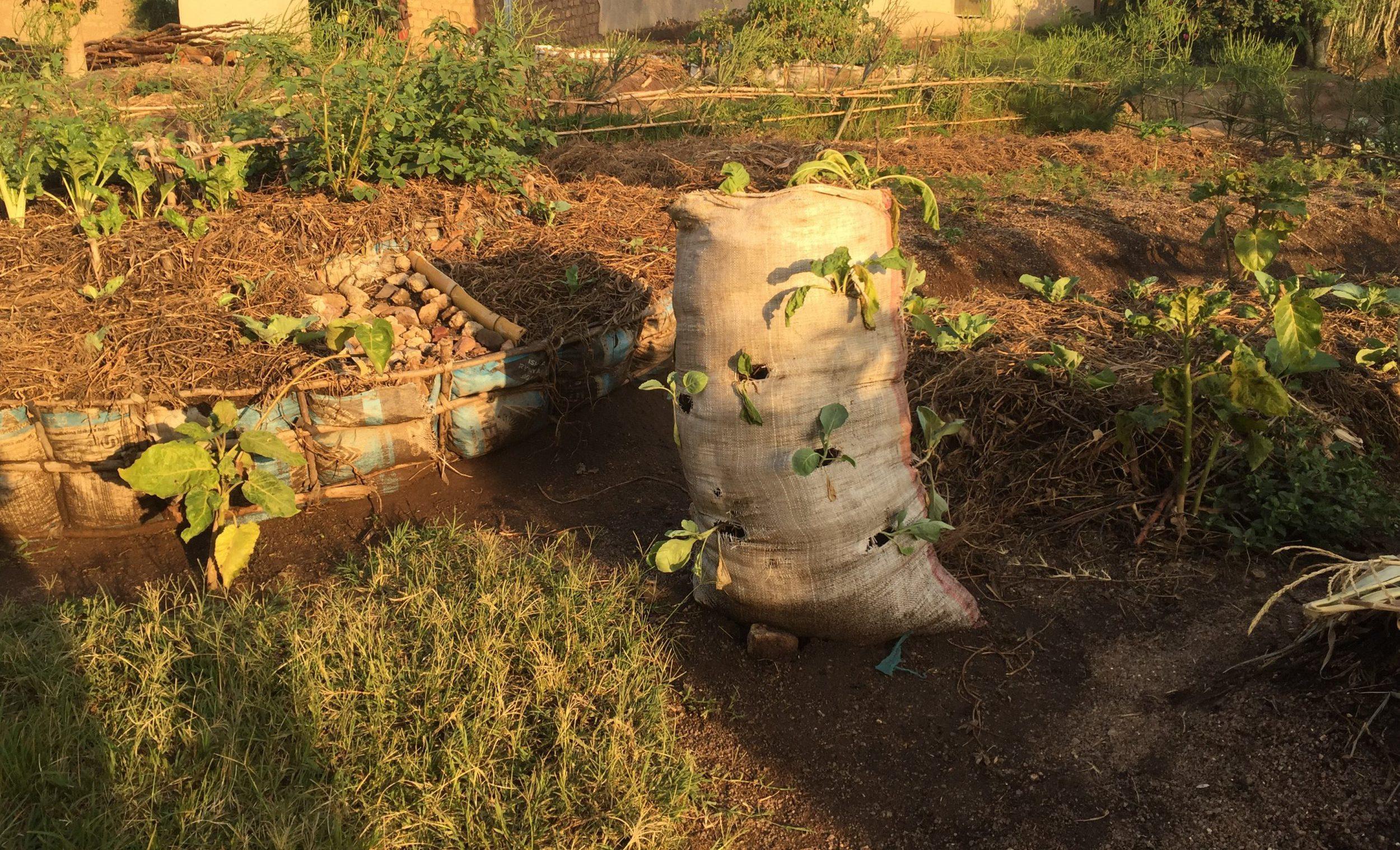 Bag garden 1 1 e1558607450381