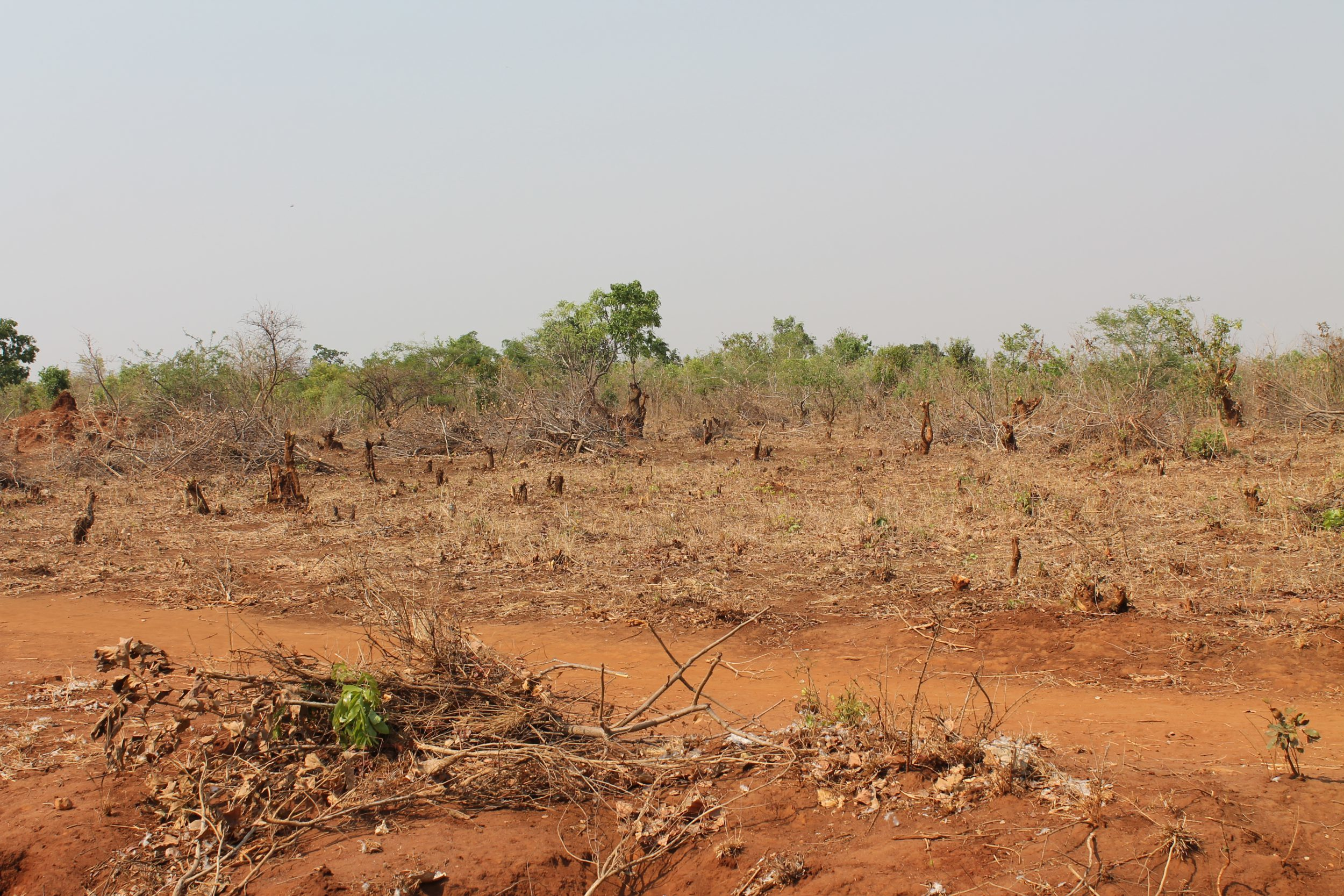 Deforestation and land degradation in Ongolwe Ward e1580204873145