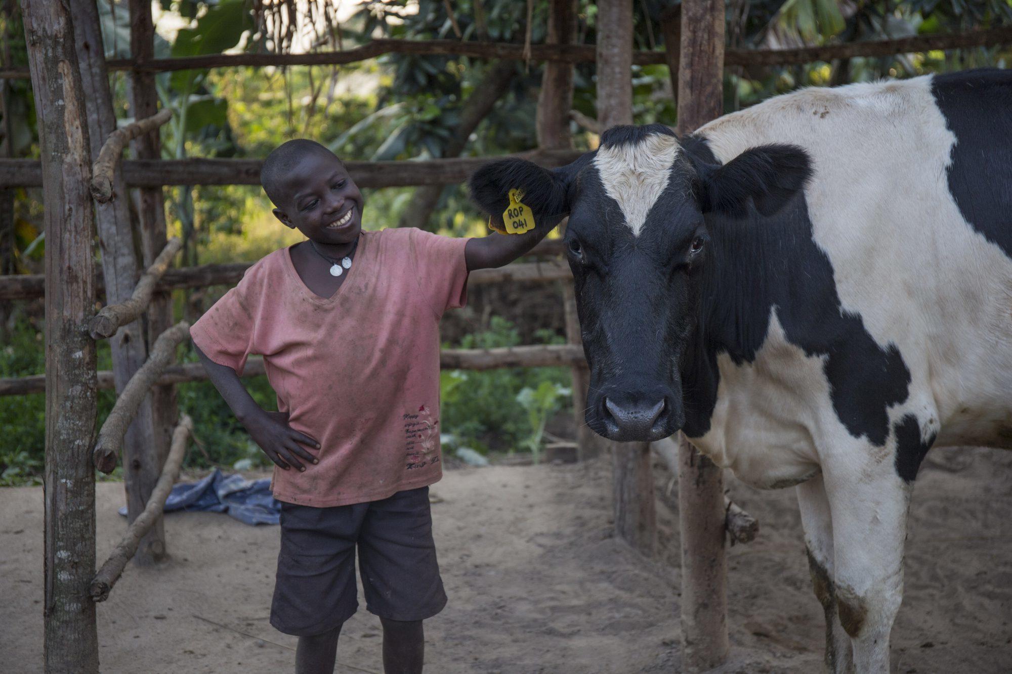 Eddie and Bena the cow 2 e1533037115804