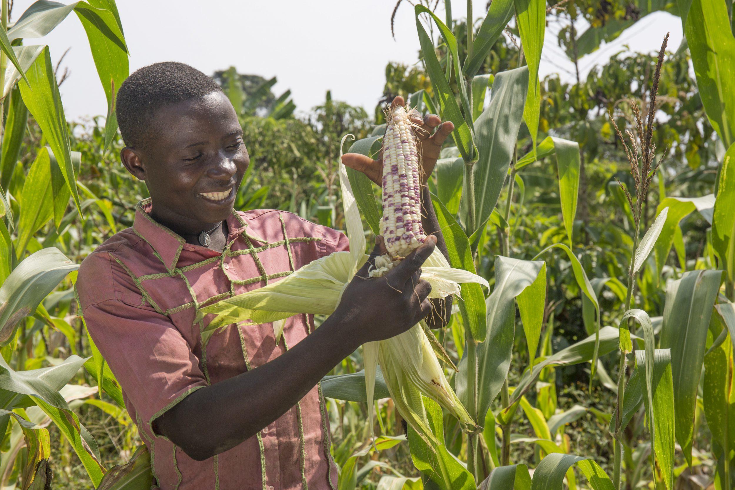 Gerald in the maize garden corn e1539347035651