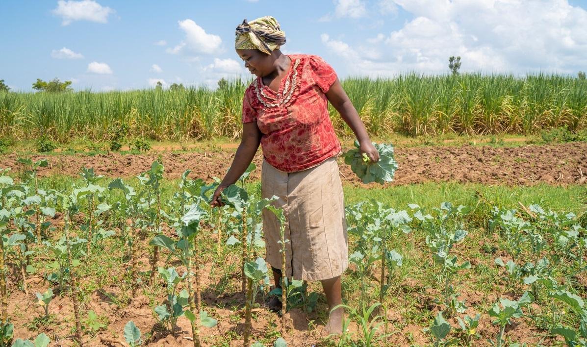 Leah in crop field