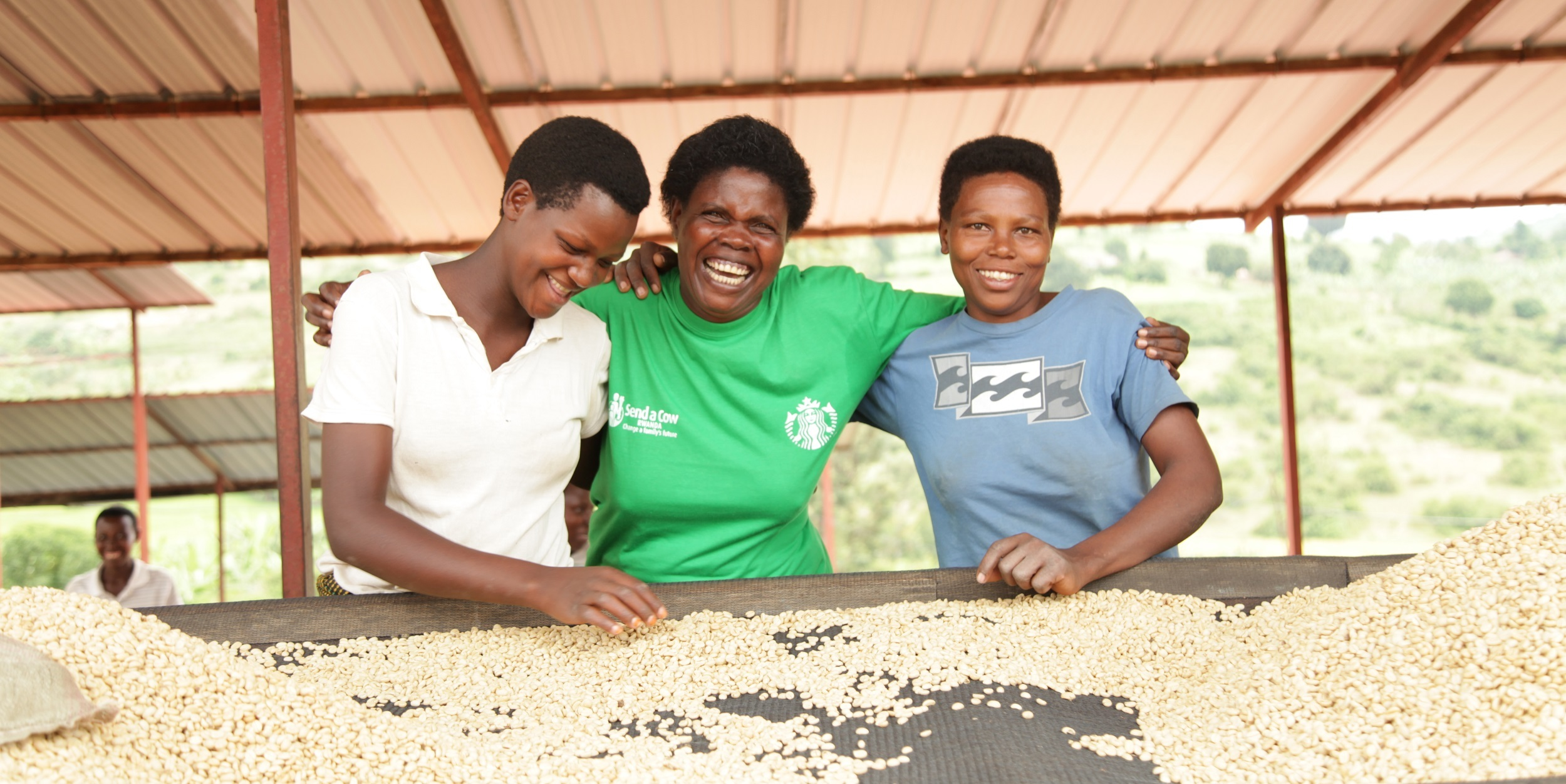 Three women are standing under cover sorting coffee beans for roasting they smile with their arms around each other