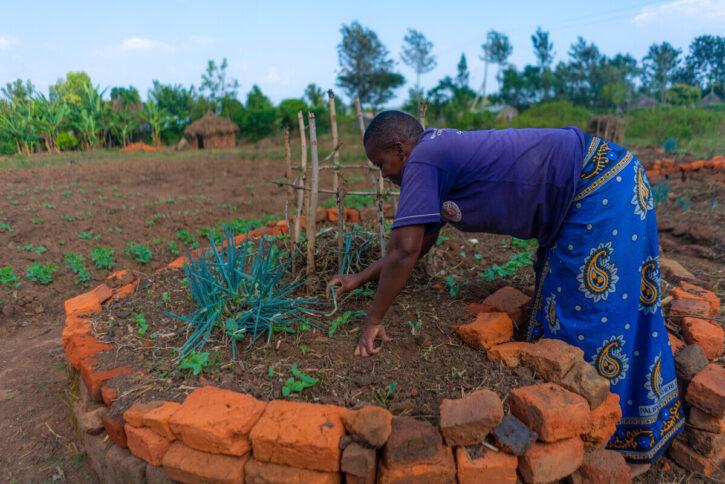 A woman, Caroline, harvesting rainwater