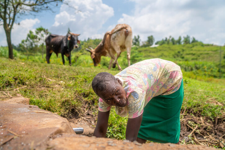 Grace leans forward to tend her garden, with two cows in the green field behind