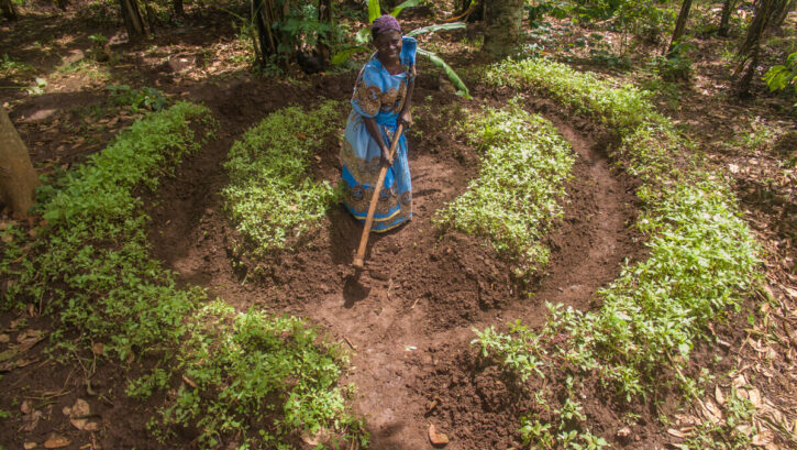 Mariam standing in the centre of a circular pattern of green crops