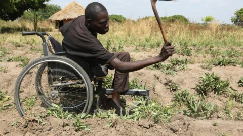 Francis working the soil from his wheelchair