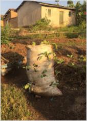 Bag garden 2
