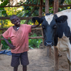 A young boy stands proudly and smiles next to his dairy cow