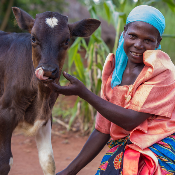 A woman in a bright orange dress and blue headscarf smiles next to her calf