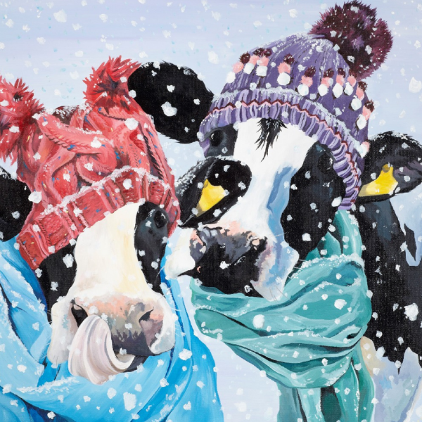Snowday cows