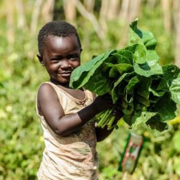 Small child holding a handful of green leafy vegetables